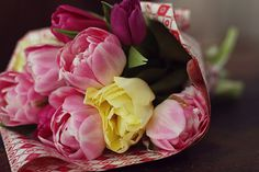 "Frühlingsblumen - Tulipa ""FlowerFriday"""