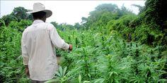 Mexicos Medical Marijuana Bill Just Took A Huge Step Forward...