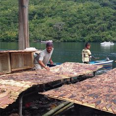 #market #fish #river #boat #waiting  #bandaneira  #maluku #ig_australia #ig_indonesia #ig_fish #bali #balibible #liburan  #kerengan #ecodive #ecotourism #pescados #subacuático #buceo #wonderfulindonesia #instanusantara #water #instasunda
