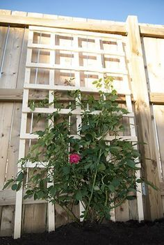 DIY Garden Trellis Projects • Lots of Ideas & Tutorials! • Including this $6 DIY Trellis from Two Zero One. #gardentrellis