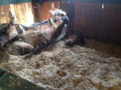 Cavallo Pazzo ... Cucciolo <3