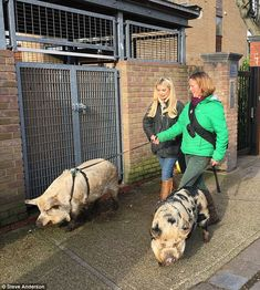 TOWIE's Toff meets pigs for bizarre This Morning segment | Daily Mail Online