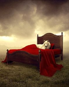 And the Big Bad Wolf ate Little Red Riding Hood. Red Riding Hood Wolf, Red Ridding Hood, Of Wolf And Man, Wolf Hybrid, Surreal Photos, Surreal Art, Wolf Spirit, Big Bad Wolf, White Wolf