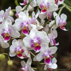 Beautiful%20orchid%20bush