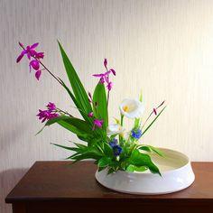 盛花 花材 紫蘭 カラー ニゲラ 鳴子ゆり 今の時期一般ではピンクの 紫蘭をよく見かけますが、 白色の紫蘭が売っているのを 見かけ新鮮な気持ちになりま りました。 花は小ぶりで可愛い。 #生け花#華道#伝統#古典 #生け花が好き#花#植物…