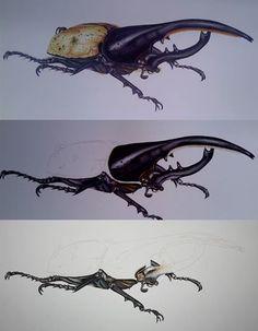 Herkül Böceği  (Dynastes Hercules)
