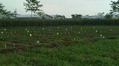 Kota Kediri in Jawa Timur tempat jalan2 :)