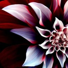 Search For: Flower - Pixdaus