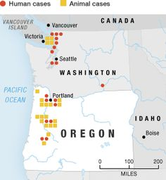 Fungal Disease Spreads Through Pacific Northwest - Researchers say most cases so far have had one risk factor or another. They have lived near a wooded area or been involved in activities that disturb the soil. They have had underlying diseases of the lung, or cancer. Forty-two percent have been taking a drug that suppresses immunity, such as corticosteroids.