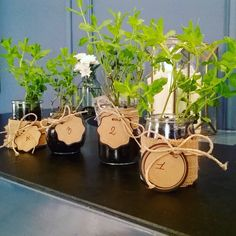 Creative time here at The Fifteen Keys Hotel for our SUNDAY BRUNCH of tomorrow! so excited about that! We made these cute placeholders with real plants of mint So... Which number will be the table you booked? #thefifteenkeyshotel #fifteenkeys #feelshomey #rionemonti #brunch #sundaybrunch #placeholder #mint #realmint #rome #roma #italy