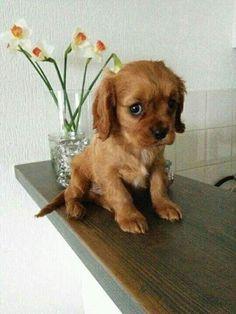 aranyos vagyok?