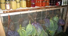 How To Store Fresh Vegetables For Months … Without A Refrigerator   Off The Grid News