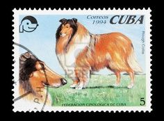 mail stamp of rough collies printed in Cuba