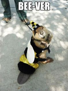 bee-ver lol Baby Animals, Funny Animals, Cute Animals, Animal Pictures, Funny Pictures, Animals Photos, Funny Images, Funny Pics, Funny Jokes