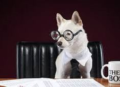 If you are looking for a business to start, the number one thing to discover is whether that business can sell something people need Choose The Right, Be Your Own Boss, Business Branding, Starting A Business, Number One, Boston Terrier, French Bulldog, Animals, Boston Terriers