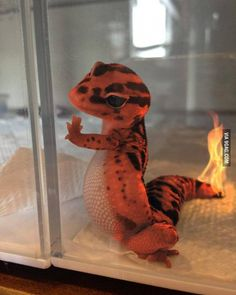 Charming Charmander. #9gag by 9gag