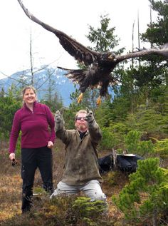 Alaska Raptor Center veterinarian Vicky Vosburg, left, and John Baird, right, the general manager of Sitka Sounds Seafoods, release a rehabilitated eagle back into the wild Sunday, March 31, 2013 in Sitka, Alaska. The center released five eagles that had been rehabilitating over the winter at the Sitka facility. MARK THIESSEN
