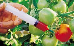 top 6 genetically modified foods
