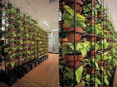 Schiavello Vertical gardens interior design green (BEST idea/engineering I've seen for wall gardens!! Simple/Brilliant!!!)