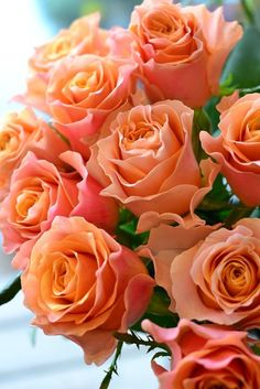 Discovered by Find images and videos on We Heart It - the app to get lost in what you love. Beautiful Rose Flowers, Pretty Roses, Love Rose, Flowers Nature, Exotic Flowers, Orange Flowers, Amazing Flowers, Beautiful Flowers, Coming Up Roses