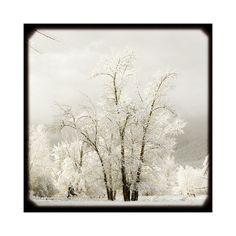 Snow Art Winter Art Photo Snow Landscape Art Photography Two 4x4 Archival Photographs