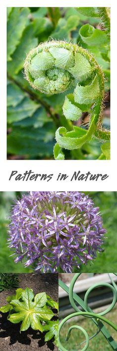 A captivating outdoor experience—finding patterns in nature (+ a lovely printable)…