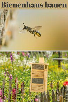 Allein in Deutschland gibt es weit über 500 Bienenarten, von denen mittlerweile beinahe die Hälfte auf der Roten Liste steht. Mit einem Bienenhaus aus dem Handel hilfst du den kleinen Brummern! #garten #bienen #biene #insekten #blumen