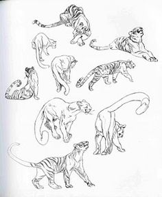 more big cats Find more at https://www.facebook.com/CharacterDesignReferences if you ar looking for: #art #character #design #model #sheet #illustration #best #concept #animation #drawing #archive #library #reference #anatomy #traditional #draw #development #artist #animal #animals #felines #cats #cat