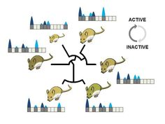 Genetic analysis in mice shows that new genes can evolve from non-functional DNA regions