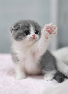 Cute baby cats, too cute kittens, adorable baby animals, small kittens, bab Baby Animals Super Cute, Cute Baby Cats, Cute Little Animals, Cute Cats And Kittens, Cute Funny Animals, Adorable Kittens, Funny Cats, Super Cute Kittens, White Kittens