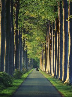 long tree-lined road.