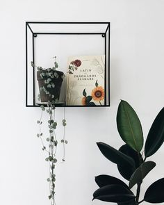 "1,056 Likes, 12 Comments - Anna (@littleandlush) on Instagram: ""Favorite shelf, favorite book and pretty plants ✨ #ceropegiawoodii #latinforgardeners…"""