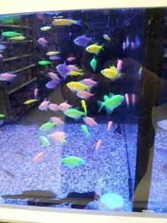 1000 images about fishy on pinterest betta fish fish for Walmart fish supplies