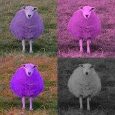 POP SHEEP