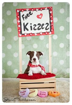 Aww....free puppy kisses pet photo session!!! Cutest picture ever!!! Dog | Kissing Booth | Photography | Valentine's Day Photo Session Idea ♡
