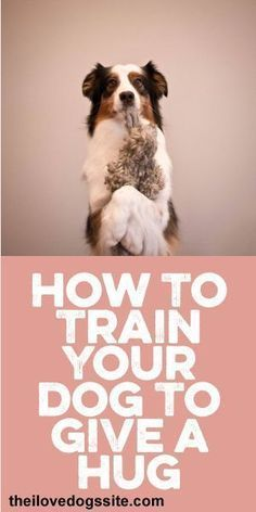 How To Train Your #Dog To Give A Hug! :) #DogTraining