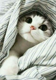 Kitten in the blanket...