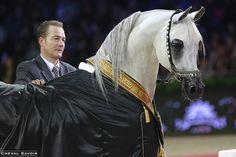Baanderos (Marwan Al Shaqab x HB Bessolea par Besson Carol), médaille de Platine.