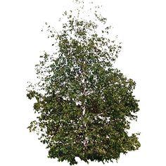 arbre d tour tree pinterest. Black Bedroom Furniture Sets. Home Design Ideas