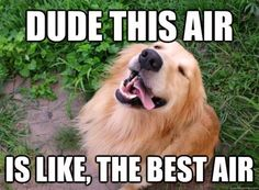 Goldens see everything as amazing!