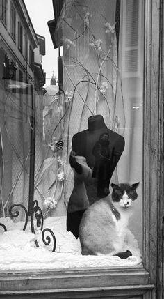 window by kitty