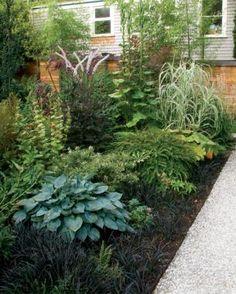 2 Ways to Design Bold Gardens - FineGardening Garden Paths, Lawn And Garden, Small Gardens, Outdoor Gardens, Fine Gardening, Shade Plants, Shade Garden, Garden Styles, Dream Garden