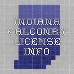 Indiana Falconry License Guide
