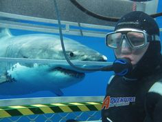 Shark diving in Port Lincoln... def. on the bucket list