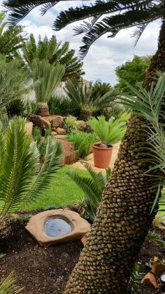 Creating Beauty At Home With Landscape Design Tips! Tropical Landscaping, Modern Landscaping, Tropical Garden, Tropical Plants, Yard Landscaping, Modern Landscape Design, Landscape Plans, Landscape Architecture, Succulent Rock Garden