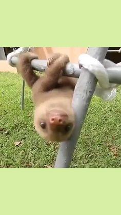 Mom Film, Cute, Animals, Ideas, Kawaii