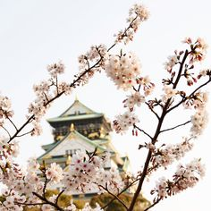 """""""Blossoming in Ôsaka"""" by Sylvain Janneton. Must visit Japan during cherry blossom season!"""