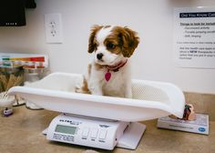 """Heh…am I doing it right?"" 