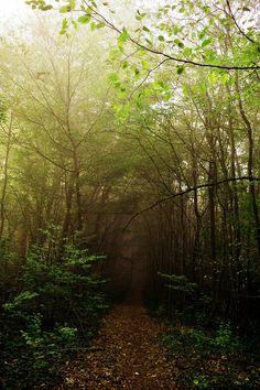 The path by DavidMnr on DeviantArt