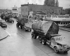 Sequoia-Trees in Kalifornien:  Der Bestand der bis zu 2.200 Jahre alten Mammutbäume umfasste ursprünglich an die 8.000 Quadratkilometer. 90 % davon wurden zwischen 1850 – 1960 im Raubbau abgeholzt. Rund 3 % der heutigen Fläche ist noch Urwald. Bedenkt, nicht Bosheit richtet einzigartige Lebensräume zugrunde, sondern meist nur eine kaufmännische Kommastelle in der Bilanz eines Unternehmens. Empfehlenswerte Literatur: www.dberona.com